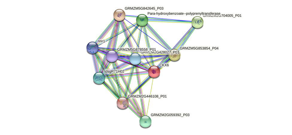 CKX6 protein (Zea mays) - STRING interaction network