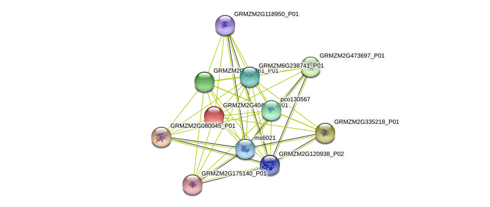 GRMZM2G404762_P01 protein (Zea mays) - STRING interaction network