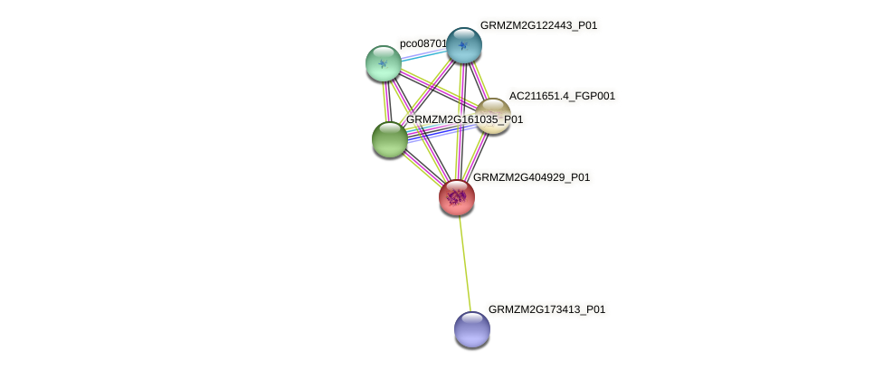 GRMZM2G404929_P01 protein (Zea mays) - STRING interaction network