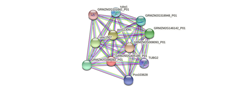 GRMZM2G405185_P01 protein (Zea mays) - STRING interaction network