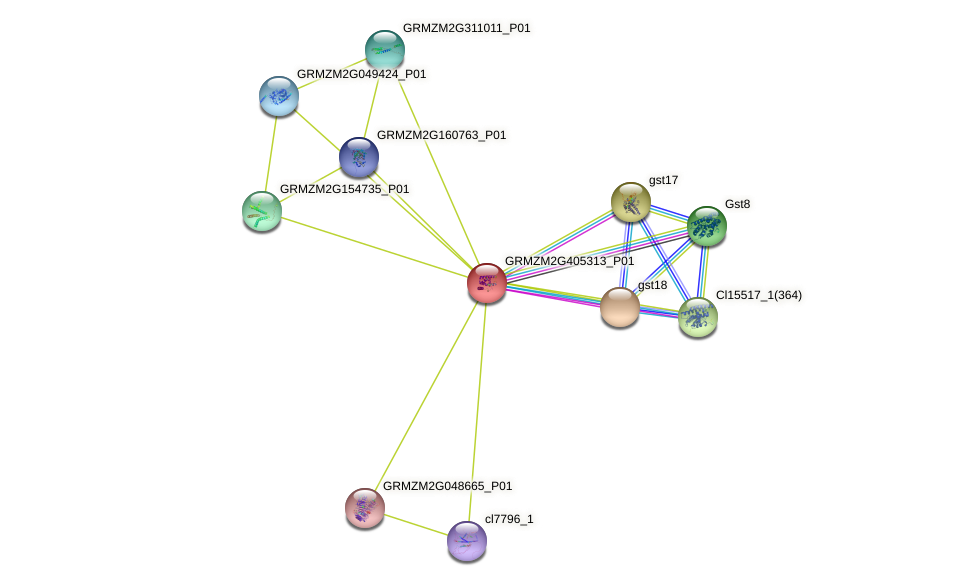 GRMZM2G405313_P01 protein (Zea mays) - STRING interaction network