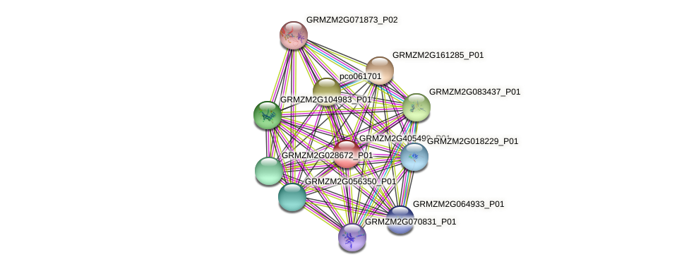 GRMZM2G405499_P01 protein (Zea mays) - STRING interaction network