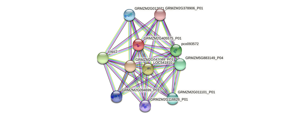 GRMZM2G405575_P01 protein (Zea mays) - STRING interaction network