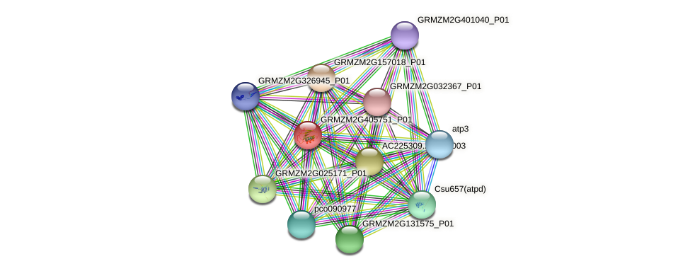 GRMZM2G405751_P01 protein (Zea mays) - STRING interaction network