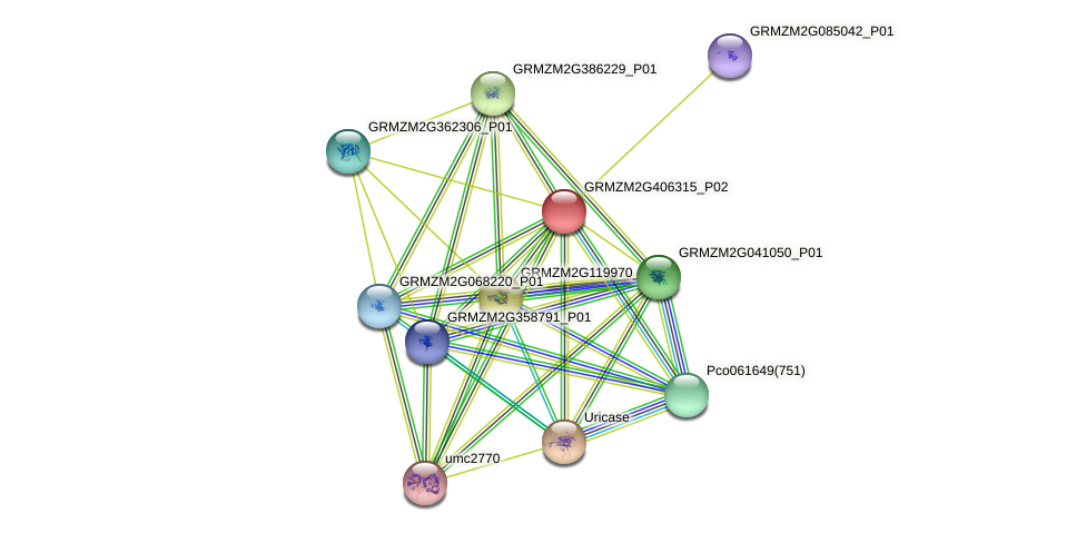 GRMZM2G406315_P02 protein (Zea mays) - STRING interaction network