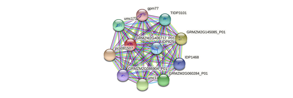 GRMZM2G406712_P01 protein (Zea mays) - STRING interaction network