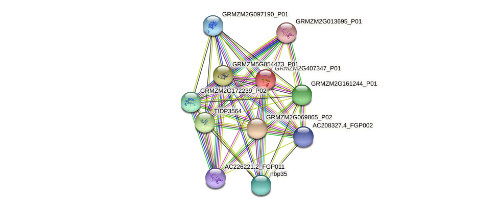 IDP53 protein (Zea mays) - STRING interaction network