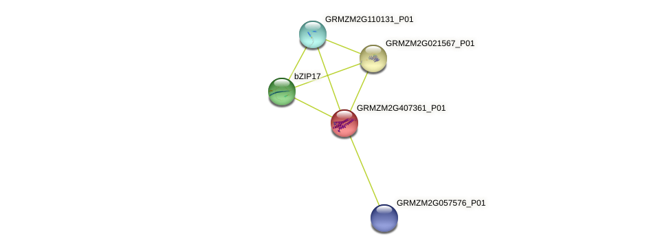 GRMZM2G407361_P01 protein (Zea mays) - STRING interaction network