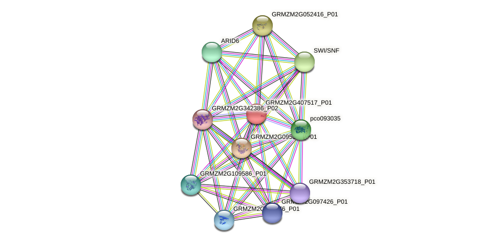 GRMZM2G407517_P01 protein (Zea mays) - STRING interaction network