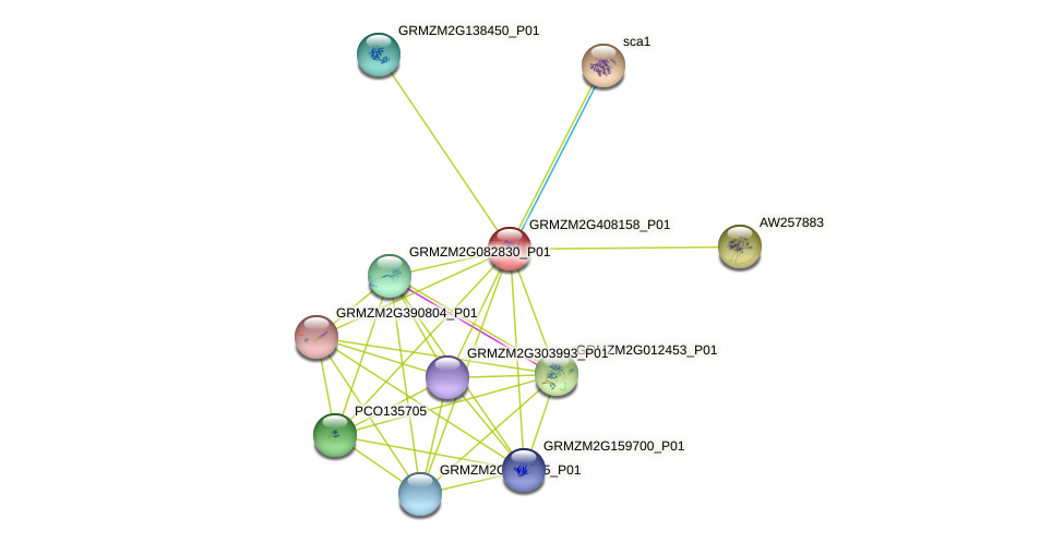 GRMZM2G408158_P01 protein (Zea mays) - STRING interaction network