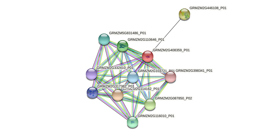 Zm.104005 protein (Zea mays) - STRING interaction network