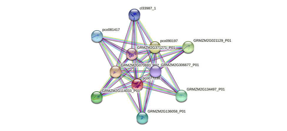 pco077238 protein (Zea mays) - STRING interaction network