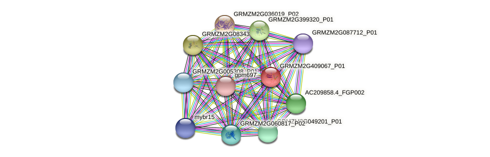 GRMZM2G409067_P01 protein (Zea mays) - STRING interaction network