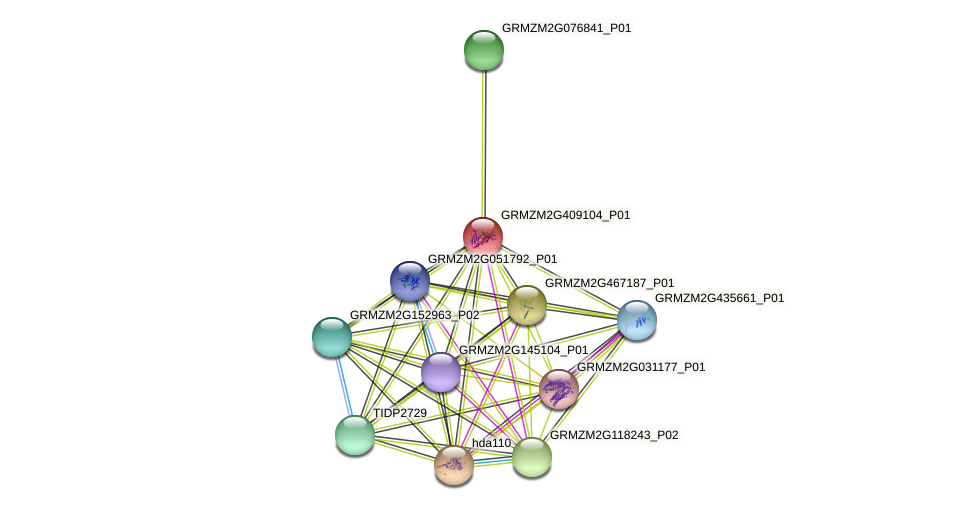 GRMZM2G409104_P01 protein (Zea mays) - STRING interaction network