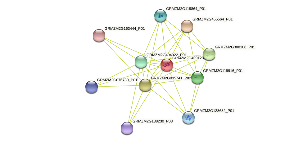 GRMZM2G409128_P01 protein (Zea mays) - STRING interaction network