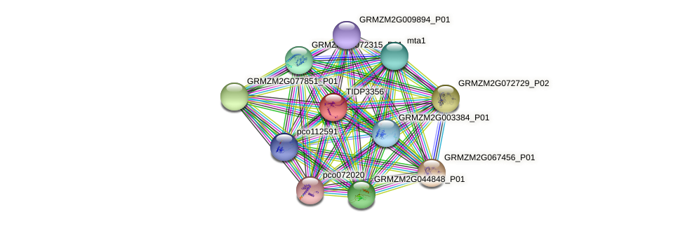TIDP3356 protein (Zea mays) - STRING interaction network
