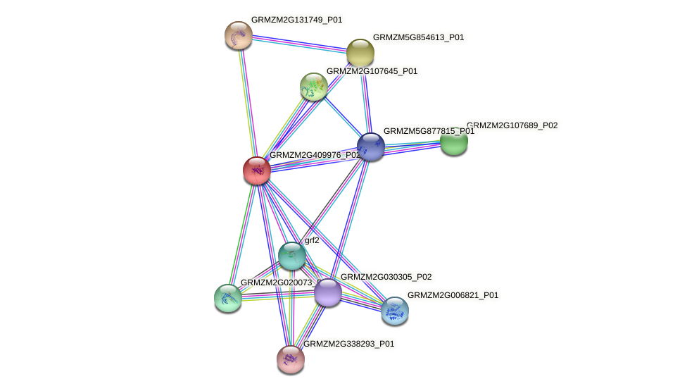 Zm.120368 protein (Zea mays) - STRING interaction network