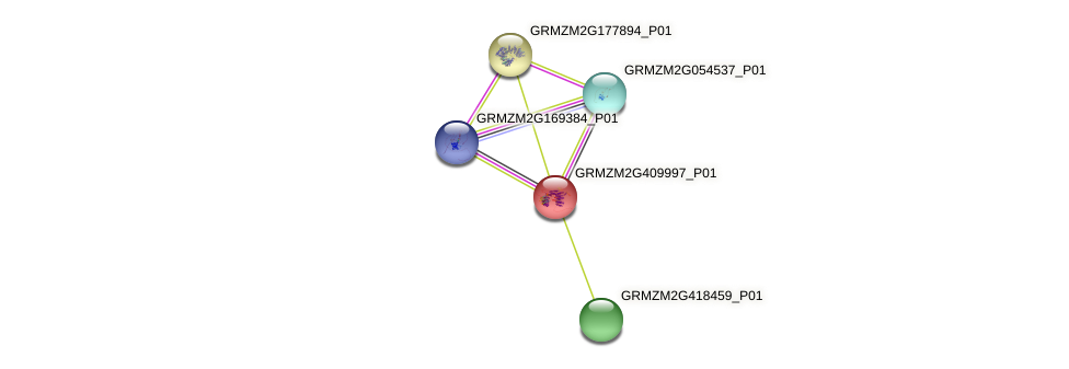 GRMZM2G409997_P01 protein (Zea mays) - STRING interaction network