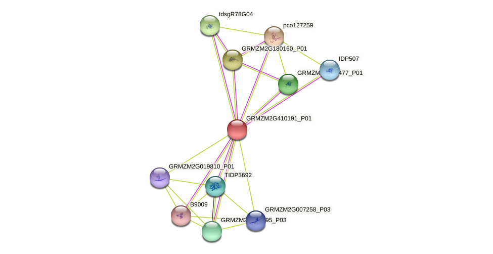 GRMZM2G410191_P01 protein (Zea mays) - STRING interaction network