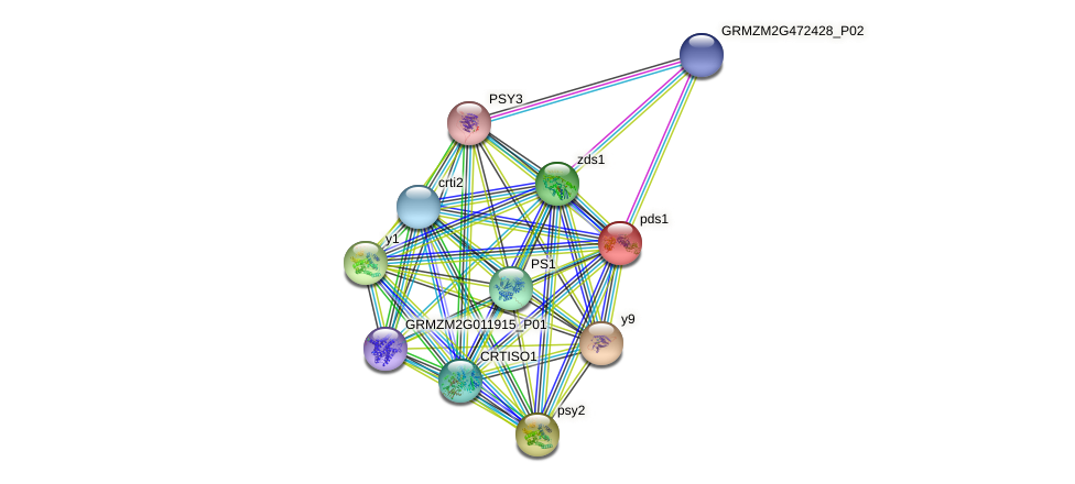 PDS1 protein (Zea mays) - STRING interaction network