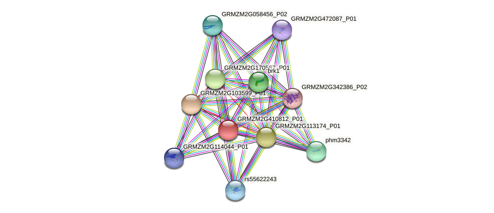 GRMZM2G410812_P01 protein (Zea mays) - STRING interaction network