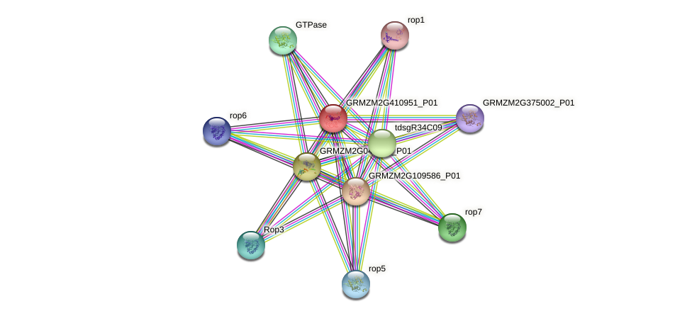 GRMZM2G410951_P01 protein (Zea mays) - STRING interaction network