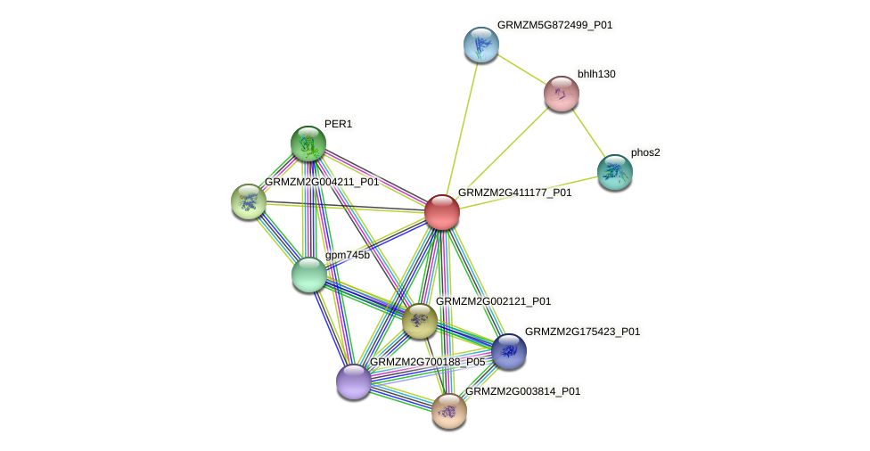 GRMZM2G411177_P01 protein (Zea mays) - STRING interaction network