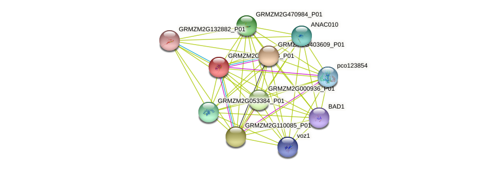 GRMZM2G411288_P01 protein (Zea mays) - STRING interaction network