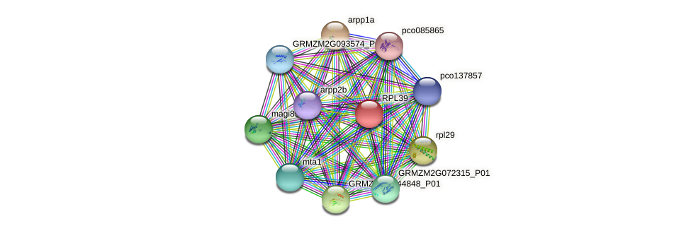 GRMZM2G411764_P01 protein (Zea mays) - STRING interaction network