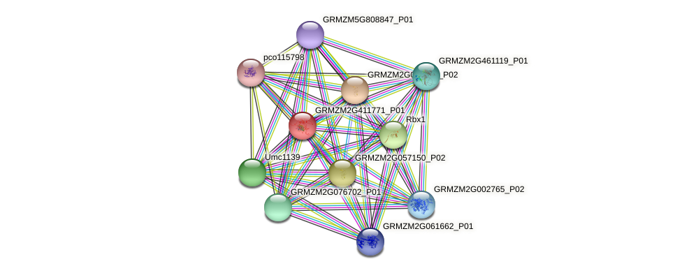 GRMZM2G411771_P01 protein (Zea mays) - STRING interaction network