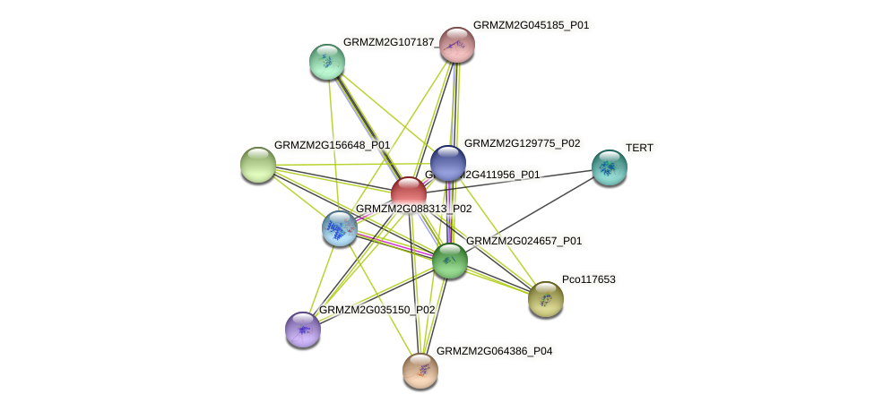 GRMZM2G411956_P01 protein (Zea mays) - STRING interaction network