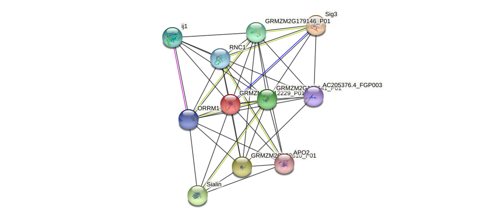 GRMZM2G412229_P01 protein (Zea mays) - STRING interaction network