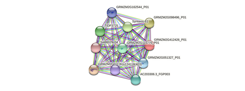 GRMZM2G412426_P01 protein (Zea mays) - STRING interaction network