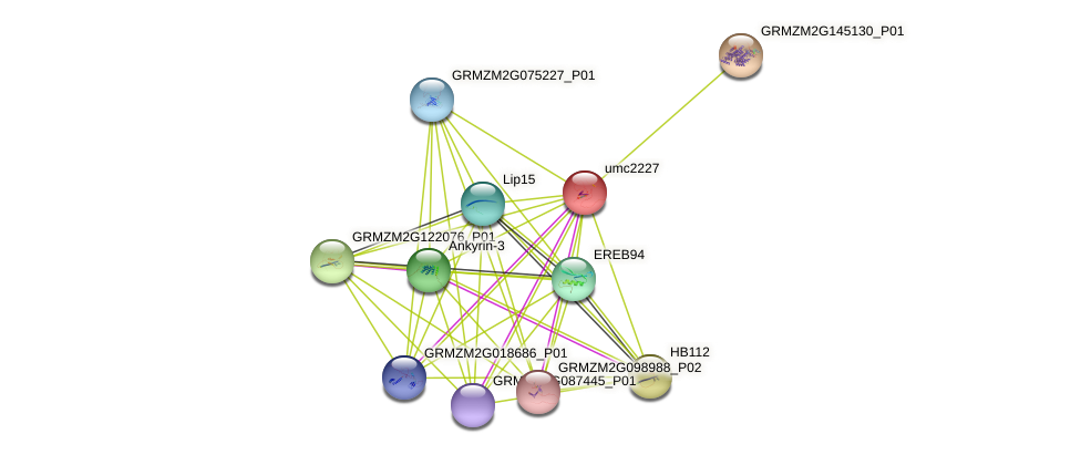 umc2227 protein (Zea mays) - STRING interaction network