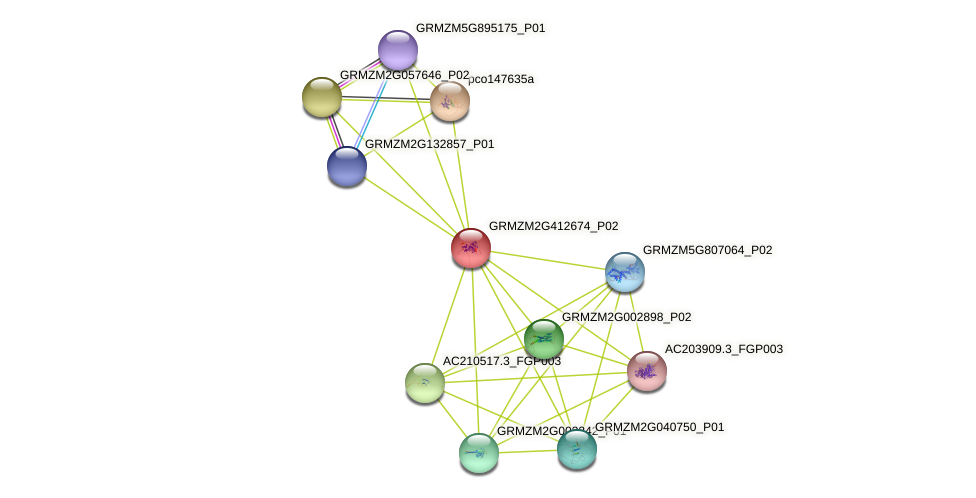 GRMZM2G412674_P02 protein (Zea mays) - STRING interaction network