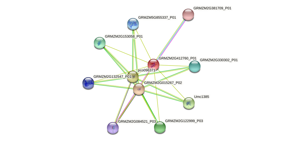 GRMZM2G412760_P01 protein (Zea mays) - STRING interaction network