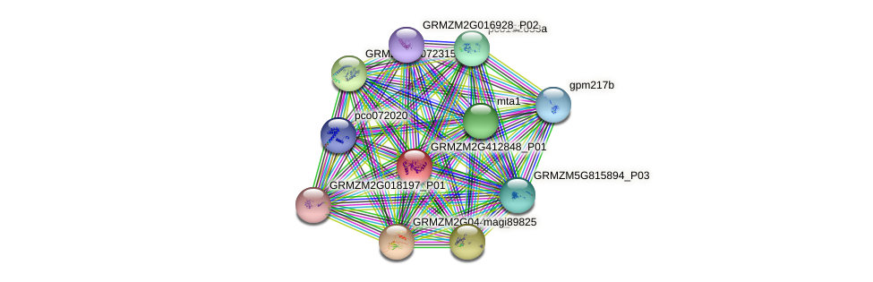 GRMZM2G412848_P01 protein (Zea mays) - STRING interaction network