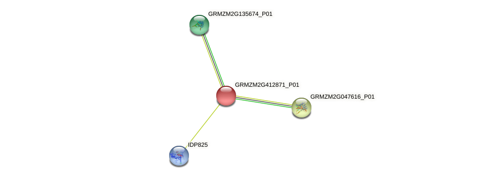 GRMZM2G412871_P01 protein (Zea mays) - STRING interaction network