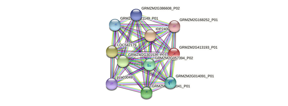 GRMZM2G413193_P01 protein (Zea mays) - STRING interaction network