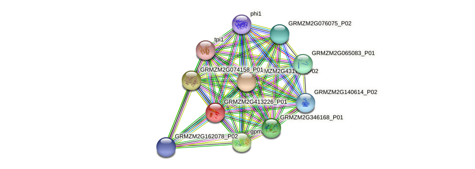 GRMZM2G413226_P01 protein (Zea mays) - STRING interaction network