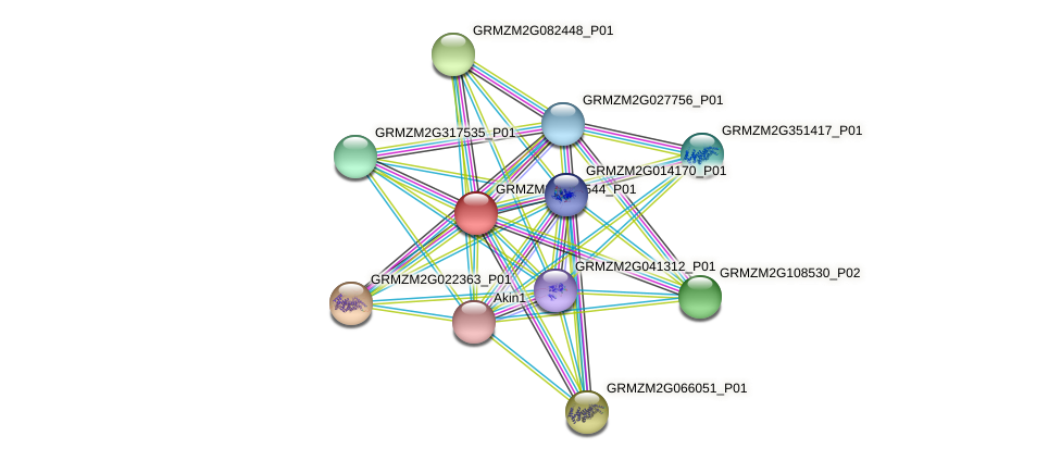 GRMZM2G413544_P01 protein (Zea mays) - STRING interaction network