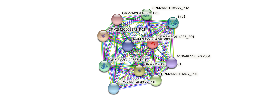 GRMZM2G414225_P01 protein (Zea mays) - STRING interaction network