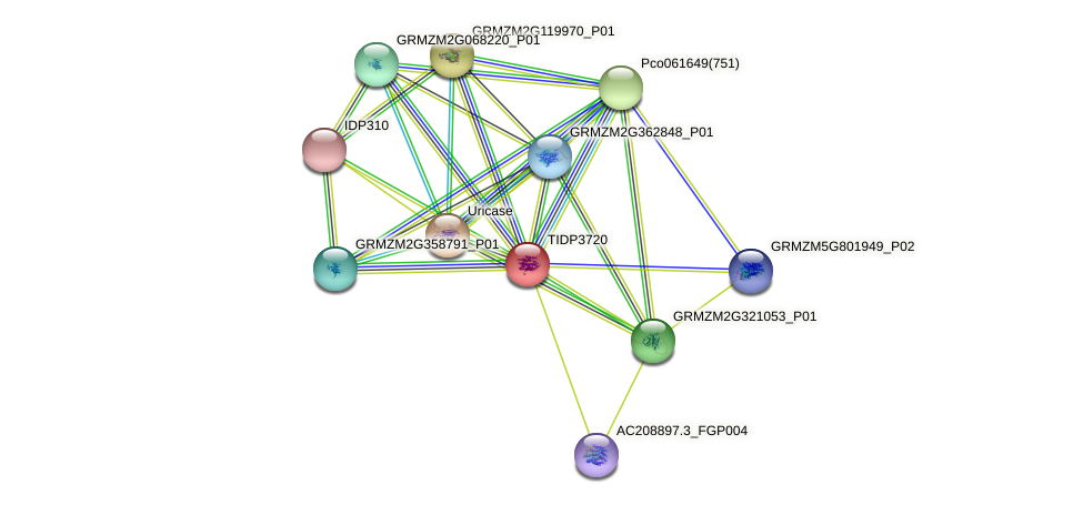 TIDP3720 protein (Zea mays) - STRING interaction network