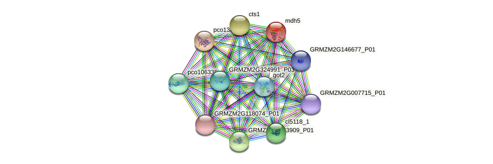 mdh4 protein (Zea mays) - STRING interaction network