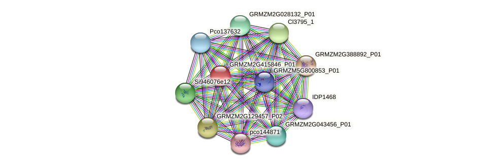 GRMZM2G415846_P01 protein (Zea mays) - STRING interaction network