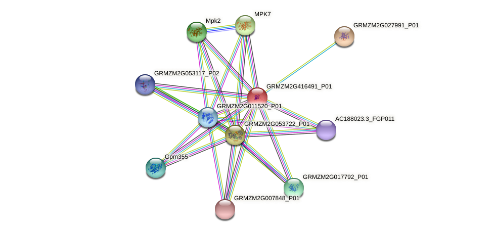 GRMZM2G416491_P01 protein (Zea mays) - STRING interaction network