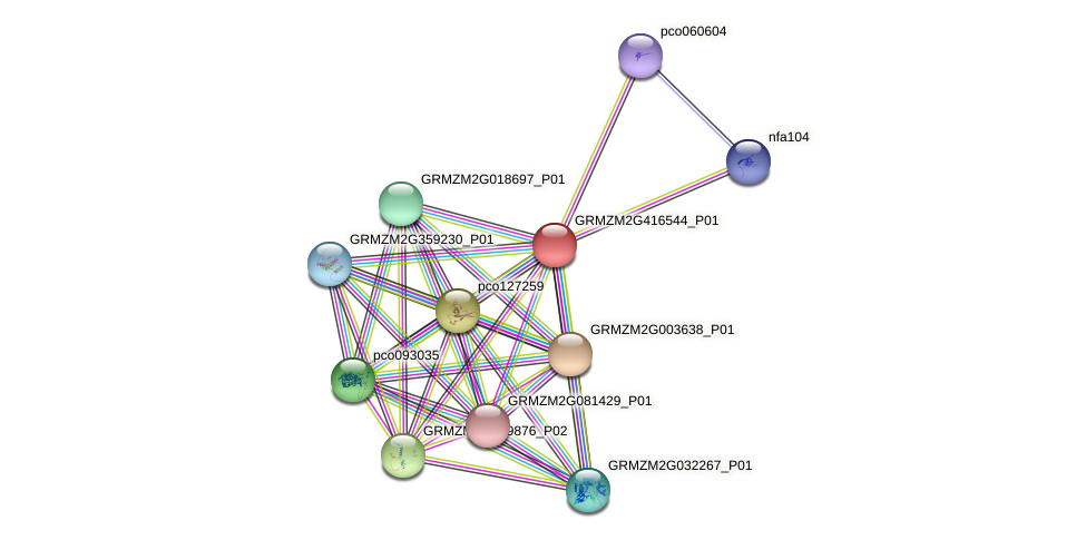 GRMZM2G416544_P01 protein (Zea mays) - STRING interaction network
