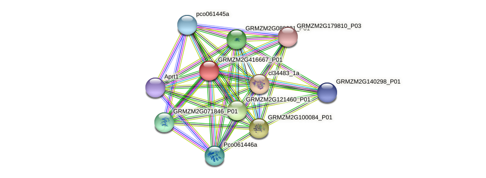GRMZM2G416667_P01 protein (Zea mays) - STRING interaction network