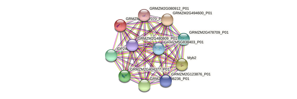 GRMZM2G417070_P01 protein (Zea mays) - STRING interaction network