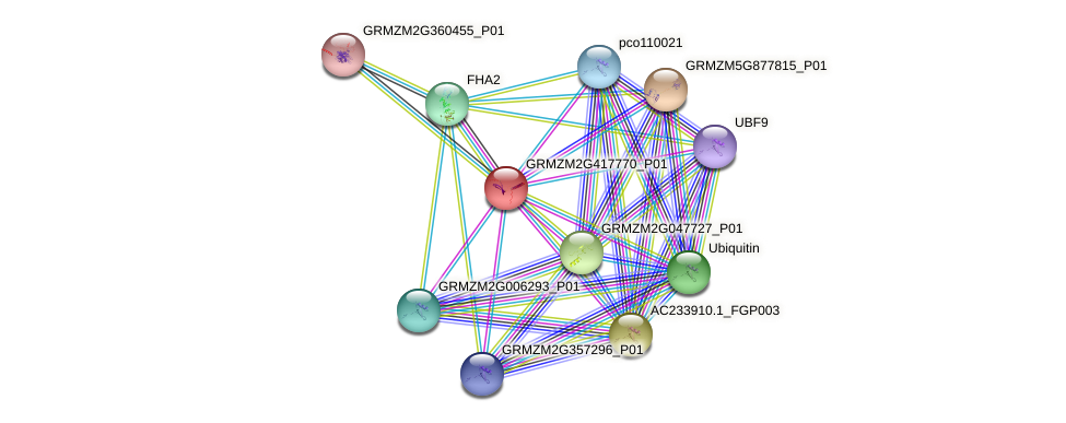 GRMZM2G417770_P01 protein (Zea mays) - STRING interaction network